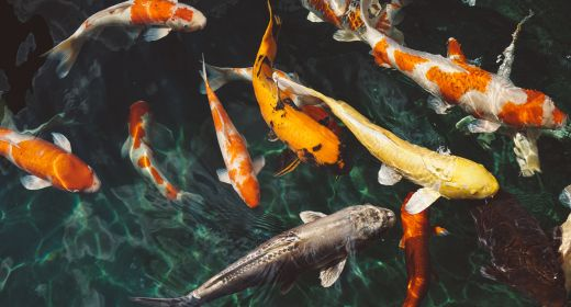 Drastic Decrease Of Marine Life Because Of Climate Change